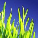 Mega Vital Shop: Weizengras